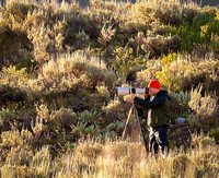 with the long lens, focused in on a bull moose in the Grand Tetons